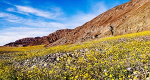 Death valley in wildflower superbloom (2016).