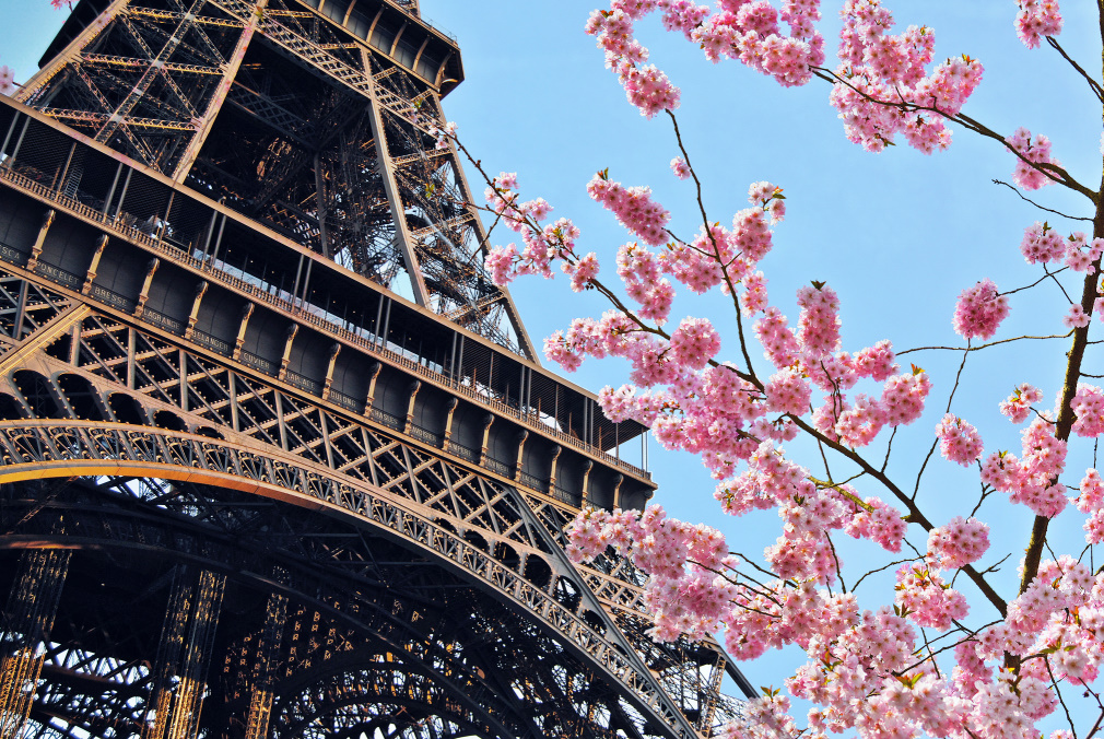 Eiffel tower and cherry blossoms.