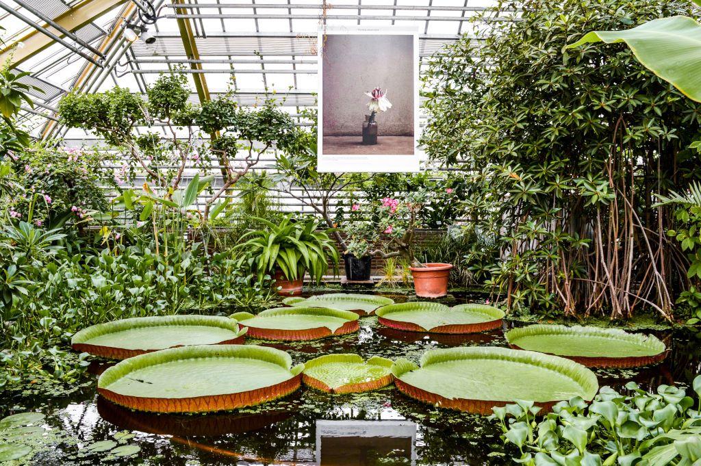 Greenhouse in the botanical garden of Leiden.