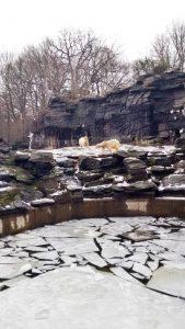 Polar Bears at Tierpark Berlin