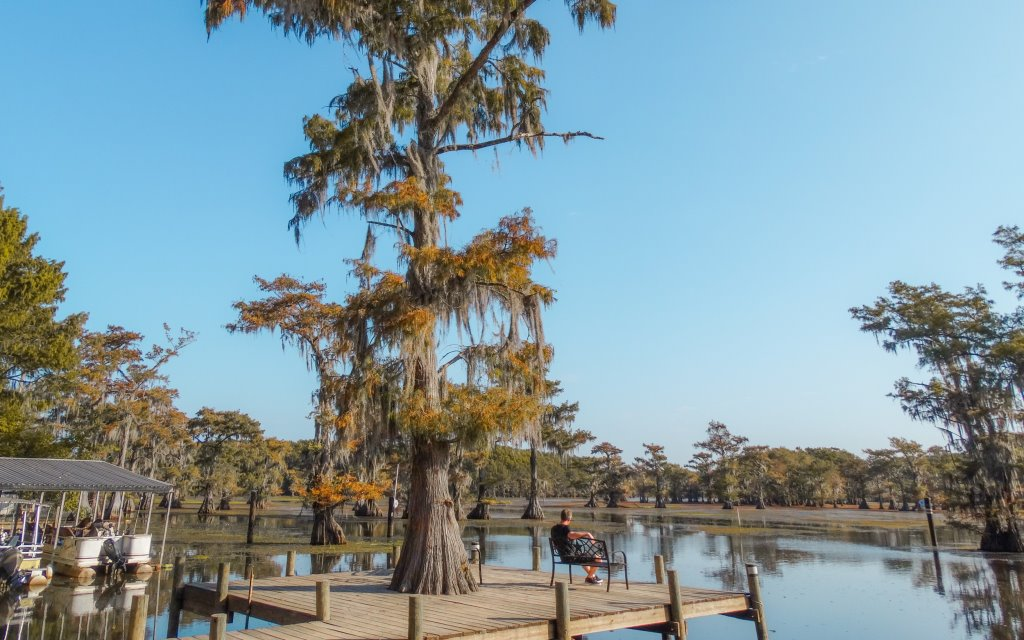 A view of Caddo Lake on a sunny day