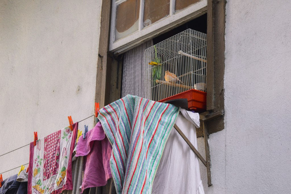 In defense of dull places: a little orange bird sits in its cage in a window.