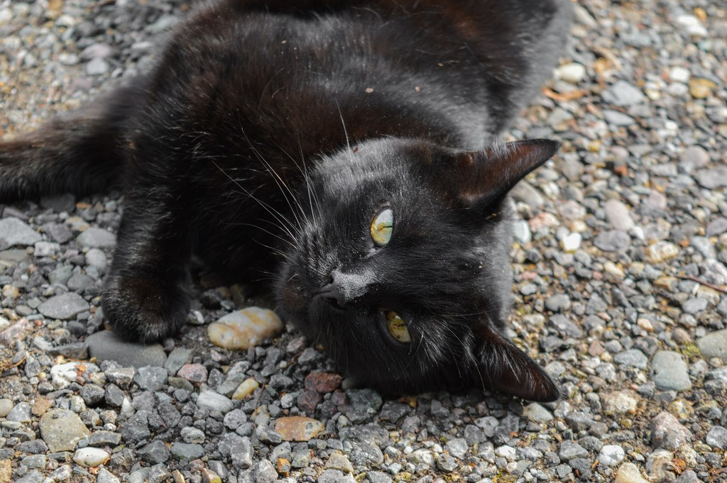 In defense of dull places: a black cat with striking eyes looks into the camera as it relaxes on the pavement.