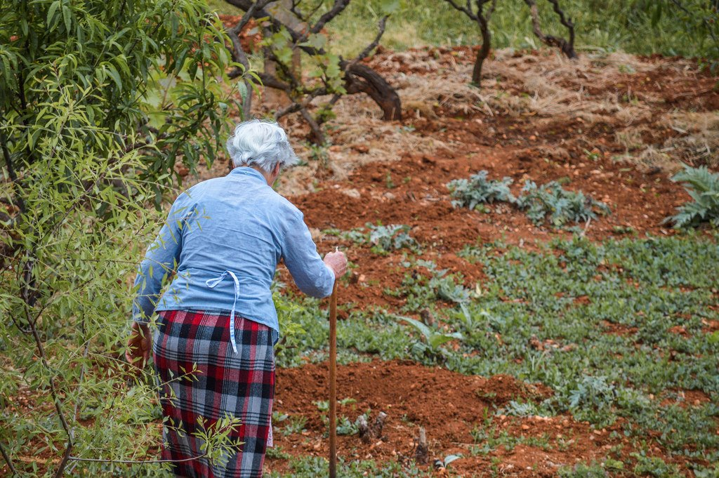 A woman tends her garden in the outskirts of Zadar
