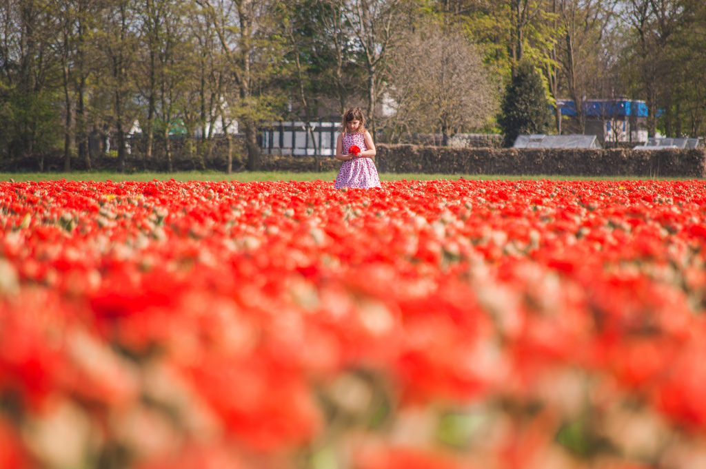 A girl in a red tulip field in Holland