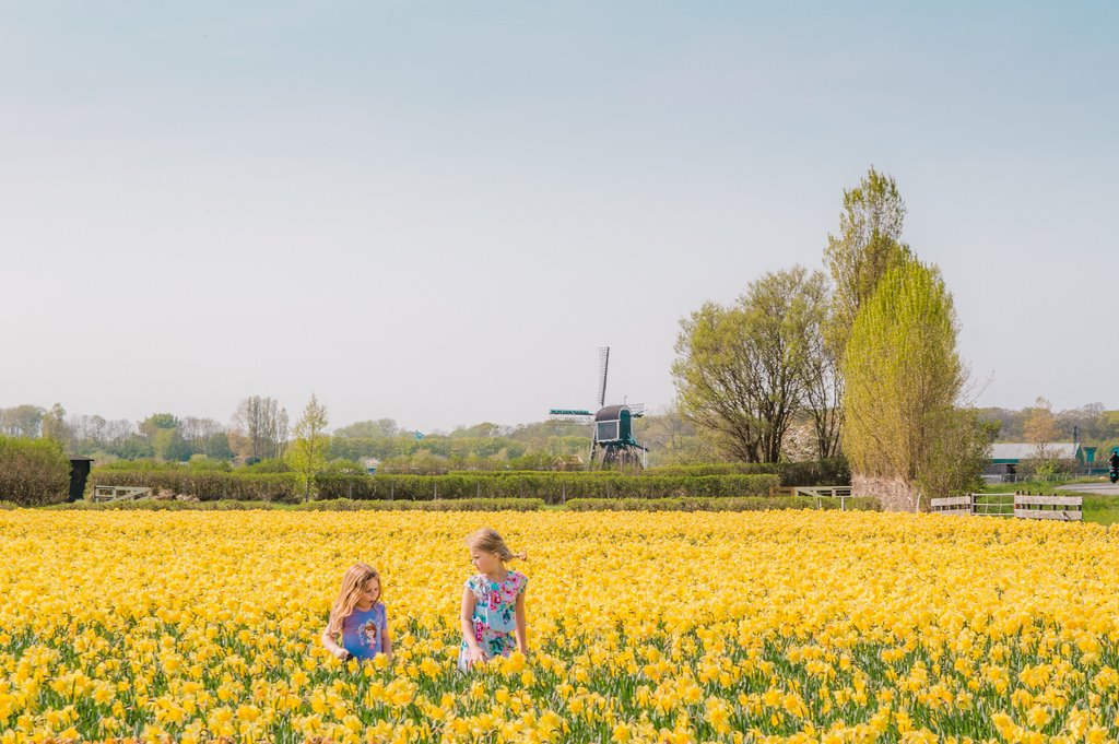 Two girls run through a yellow flower field in Holland