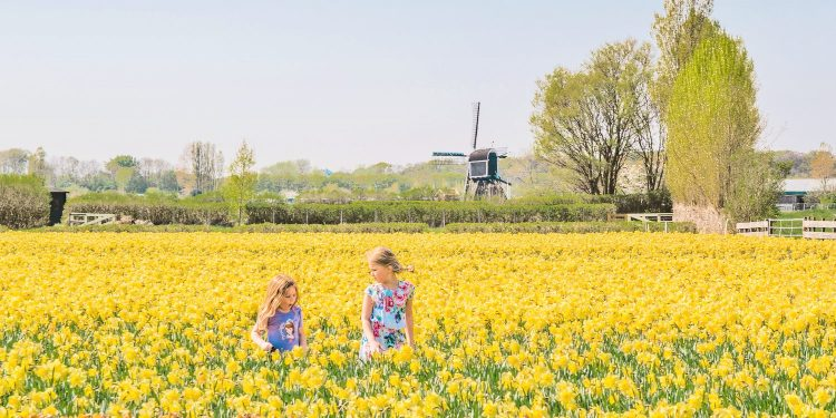 Celebrating the Spring Season in the Netherlands at 5 Different Locations