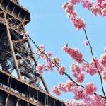 Places in Europe to See the Best Cherry Blossoms