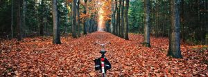8 Reasons to Look Forward to Autumn