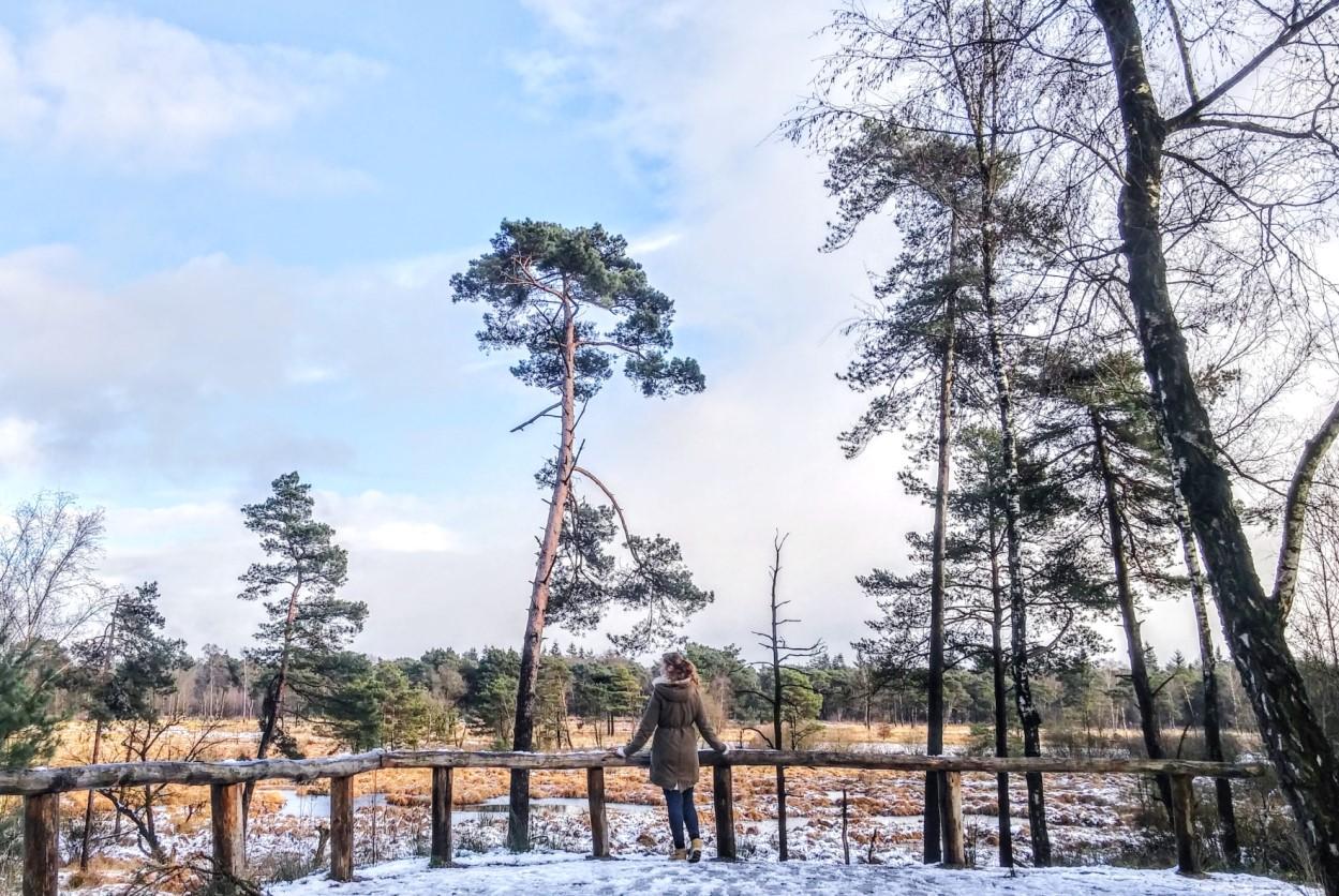 Winter forest walks