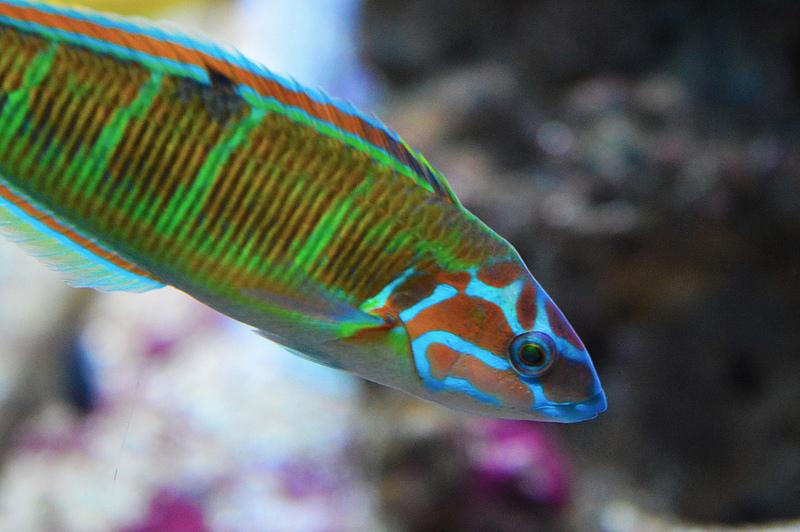 Tropical Aquarium Fish in Barcelona