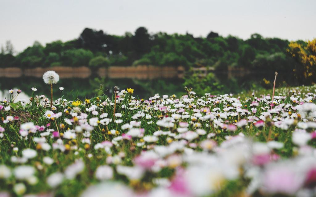Flowers on the lake's edge (Galderse Meren, Breda)