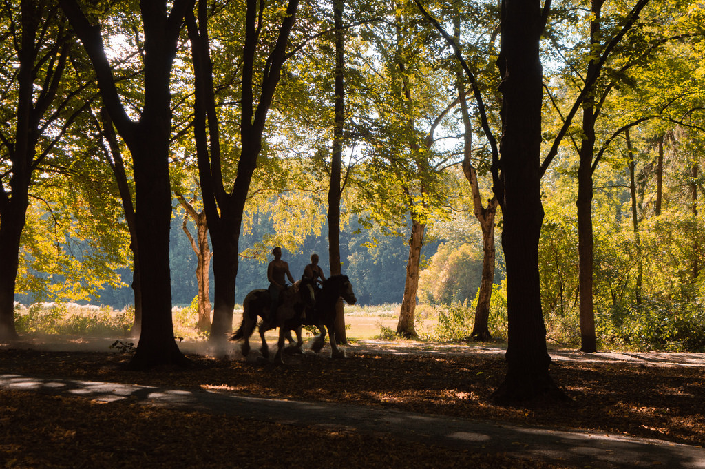 A day trip to the Amsterdam Forest: two women ride their horses underneath the trees.