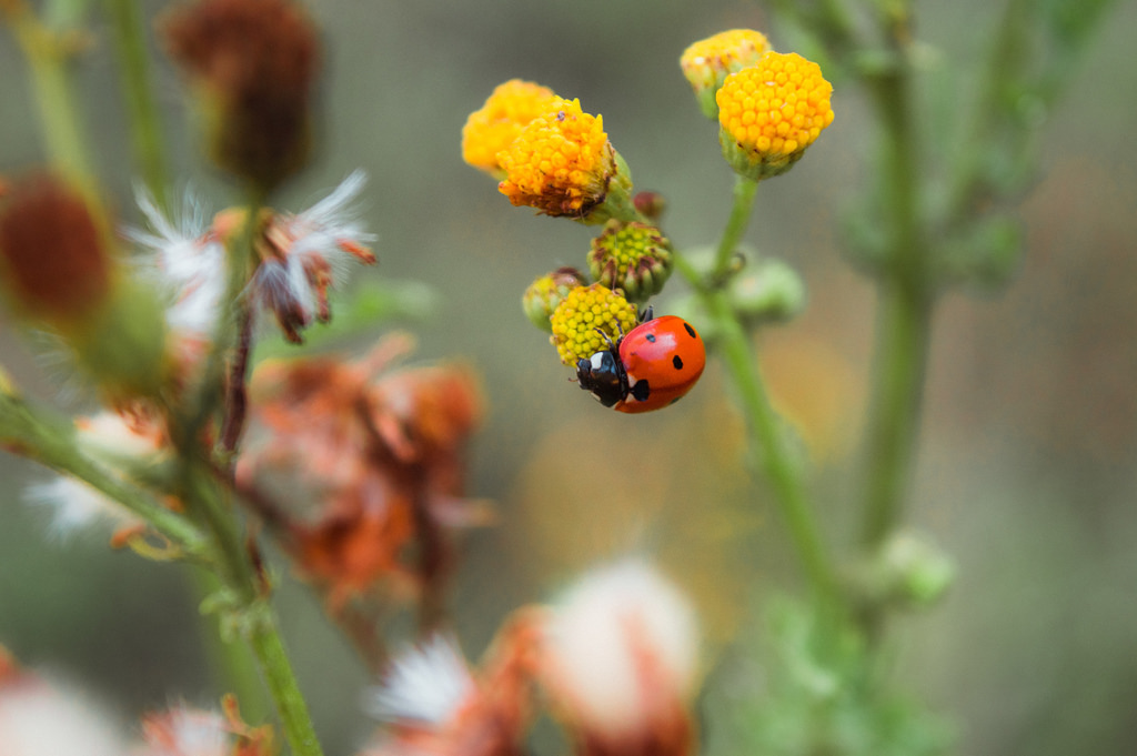 Nature at the Amsterdam Forest: a ladybug rests on a yellow flower.