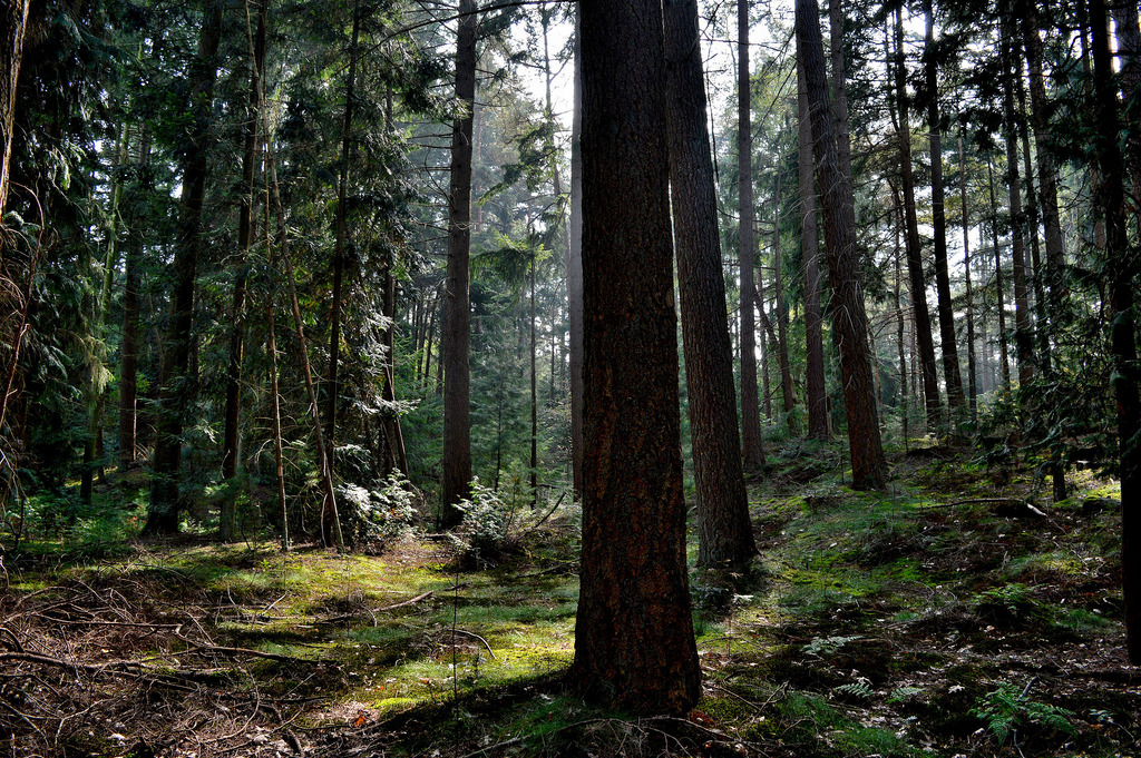 Beautiful concepts from Japanese philosophy: forest bathing is beneficial to your health.