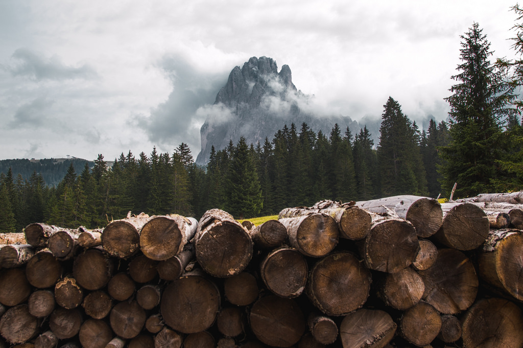 Hiking in the Dolomites, chopped trees in the forefront and Sassolungo looms in the distance.